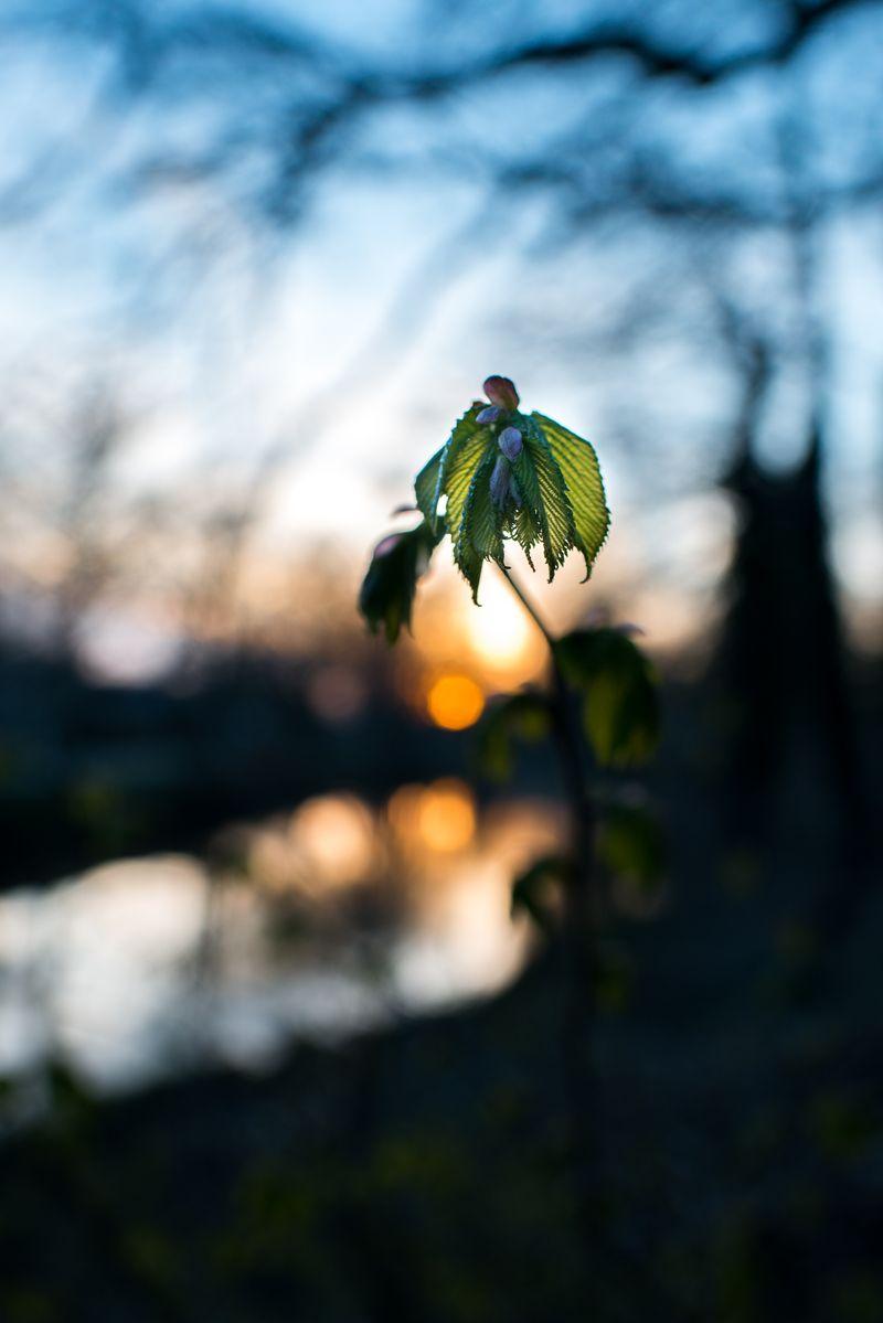 Forår ved Storåen