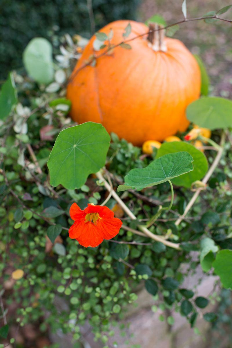 Efterårskrukke med græskar og tallerkensmækker