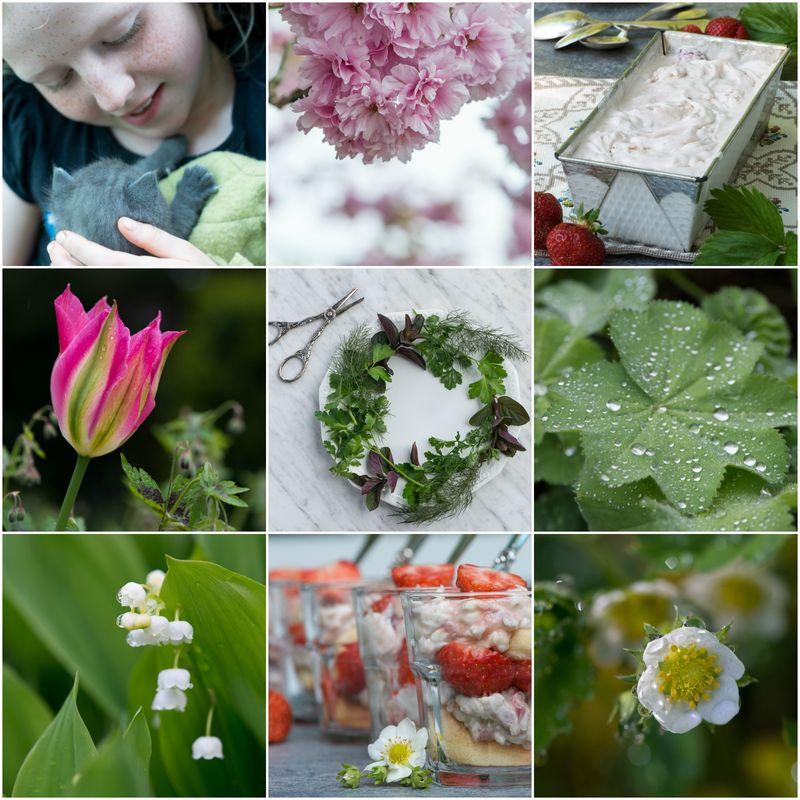 Maj 2015 Collage