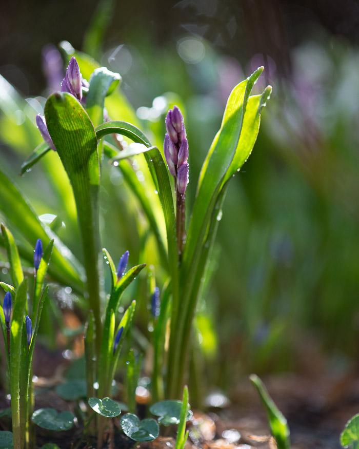 Blomster efter regn