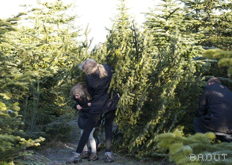 Vi henter juletræ