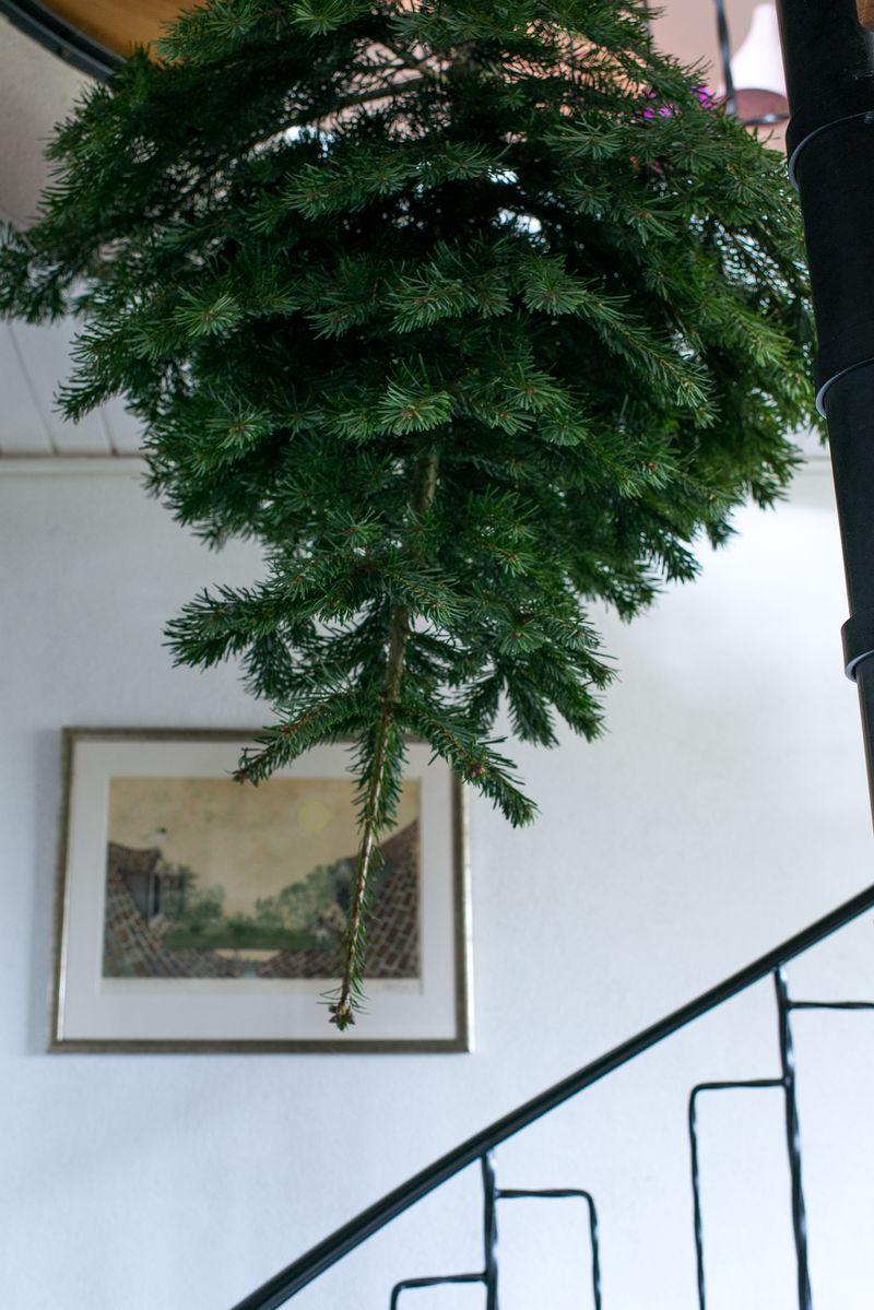 Drillenisse trick med juletræ